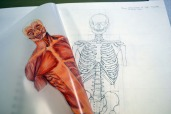 anatomy sb trunk