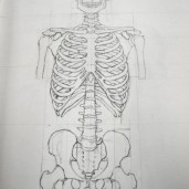 anatomy sketch book skeleton
