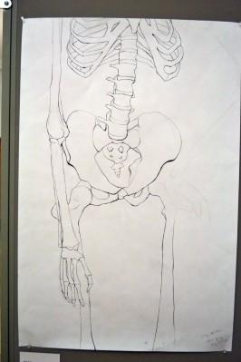 skeleton contour