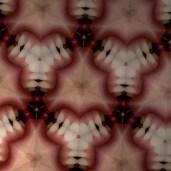 Les Fleurs du mal - Tooth Flower photograph, 14 x 18 inches, 2013